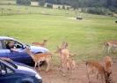 Longleat Safari 2012_2