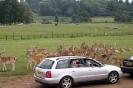 Longleat Safari 2012_3