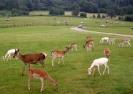 Longleat Safari 2012_4